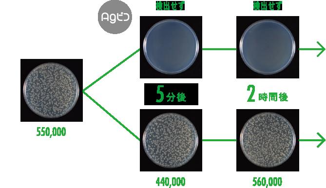 大腸菌の測定試験結果